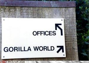Offices? OR Gorilla World?